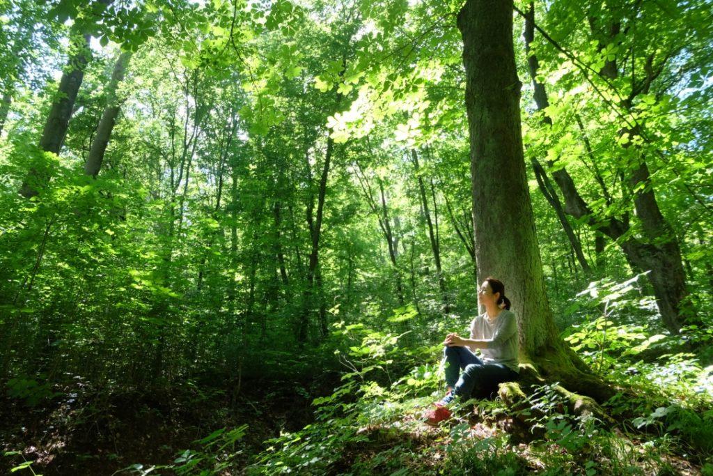 森と未来について - 森と未来 ―都会の人と、地域の森を繋ぐ―